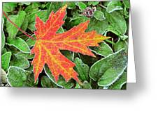 Silver Maple Frost Greeting Card