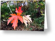 Silver Maple In Red Greeting Card