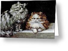 Silver Orange And White Persians Greeting Card