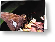 Silver-spotted Skipper Greeting Card
