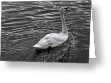 Silver Swan Greeting Card