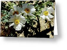 Silver Terrace Virginia City Nevada Flowers Greeting Card