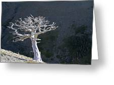 Silver Tree Glacier Park Montana Greeting Card