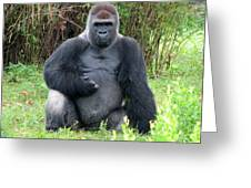 Silverback Gorilla 2 Greeting Card
