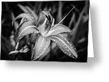 Silvered Lily Greeting Card