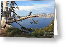 Silvery Tree Over Crater Lake Greeting Card