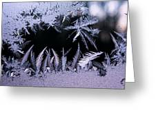 Silvery Window Fronds Greeting Card