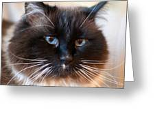 Simon Cat Greeting Card