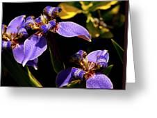 Simple Beauty IIi Greeting Card