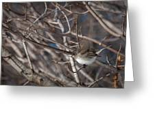 Simple Bird Greeting Card