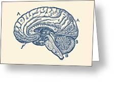 Simple Brain Diagram - Anatomy Poster