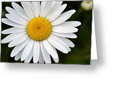 Simple Daisy Greeting Card