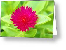 Simple Magenta In A Garden Of Green Greeting Card