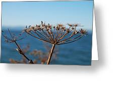 Simple Nature Greeting Card