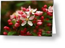 Simple Savory Spring Greeting Card