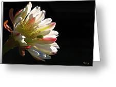 Simple Splendor Greeting Card