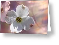 Simplicity A Dogwood Blossom Greeting Card