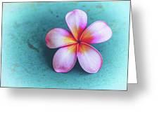 Simplicity Greeting Card by Jade Moon