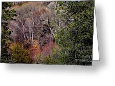 Simply Art Of Nature Greeting Card