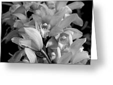 Simply Orchids Greeting Card