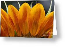 Simply Petals Greeting Card