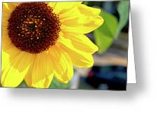 Simply Sunflower Greeting Card