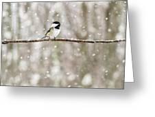 Sing Chickadee Sing Greeting Card