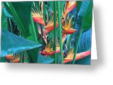 Singapore Heliconia Greeting Card