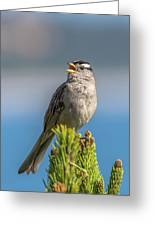 Singing Sparrow Greeting Card