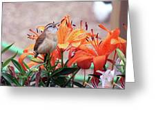 Singing Wren In The Lilies Greeting Card