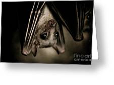 Single Bat Hanging Portrait Greeting Card