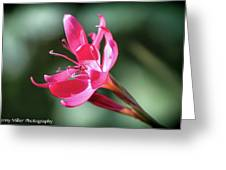 Single Beauty Greeting Card