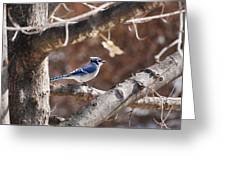 Single Blue And Available Greeting Card