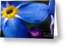 Single Blue Wood-forget-me-not Greeting Card