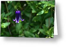 Single Clematis Bell Blossom Greeting Card