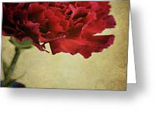 Single Dark Red Carnation In Blue Bottle Greeting Card