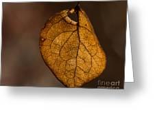 Single Fall Leaf Greeting Card