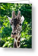 Single Giraffe Greeting Card
