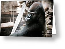 Single Gorilla Sitting Alone Greeting Card