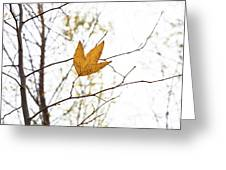Single Leaf In Fall Greeting Card