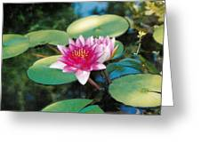 Single Lilly Greeting Card