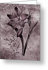 Single Lily-vintage Series  Greeting Card