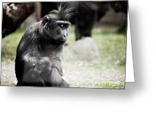 Single Macaque Monkey Sitting Greeting Card