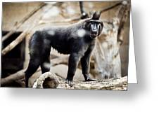 Single Macaque Monkey Standing Greeting Card