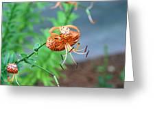 Single Orange And Black Tiger Lily Greeting Card