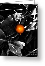 Single Orange Berry Greeting Card