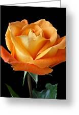 Single Orange Rose Greeting Card