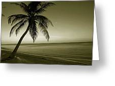 Single Palm At The Beach Greeting Card