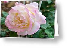 Single Peace Rose Greeting Card