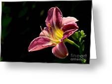 Single Pink Day Lily Greeting Card